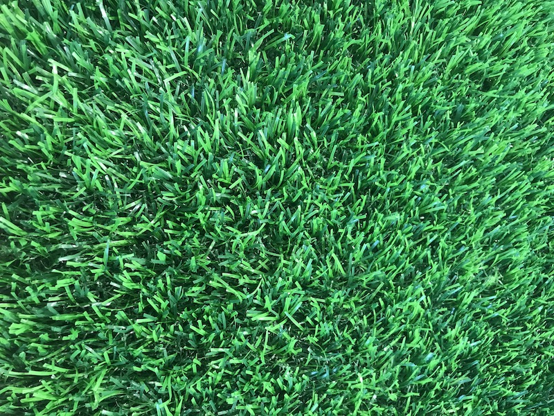 fresh green  lawn