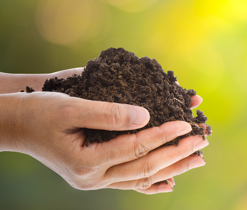 A handful of black soil over nature  background